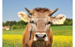 Trazabilidad de marcación rFID en animales